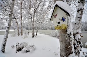 Wann das Vogelhaus aufhängen?