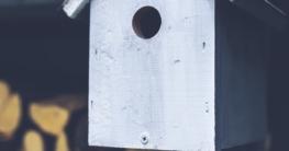 Welchen Vogelhaus Lochdurmesser