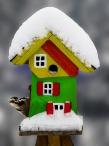 Vogelfutter im Winter