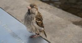 Verletzter Vogel und die erste Hilfe