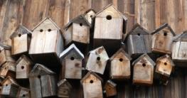 Wo schlafen Vögel
